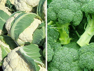 Conopidă/Broccoli ►