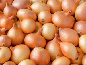 Simba onions